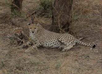 4 days serengeti manyara