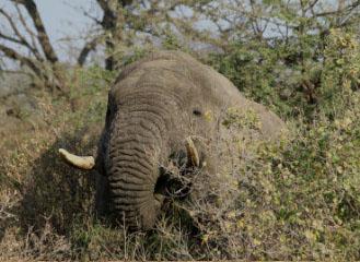 6 days safaris arusha manyara