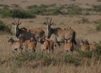 7 days tarangire-manyara safaris