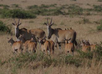 7 days tarangire-manyara safaris